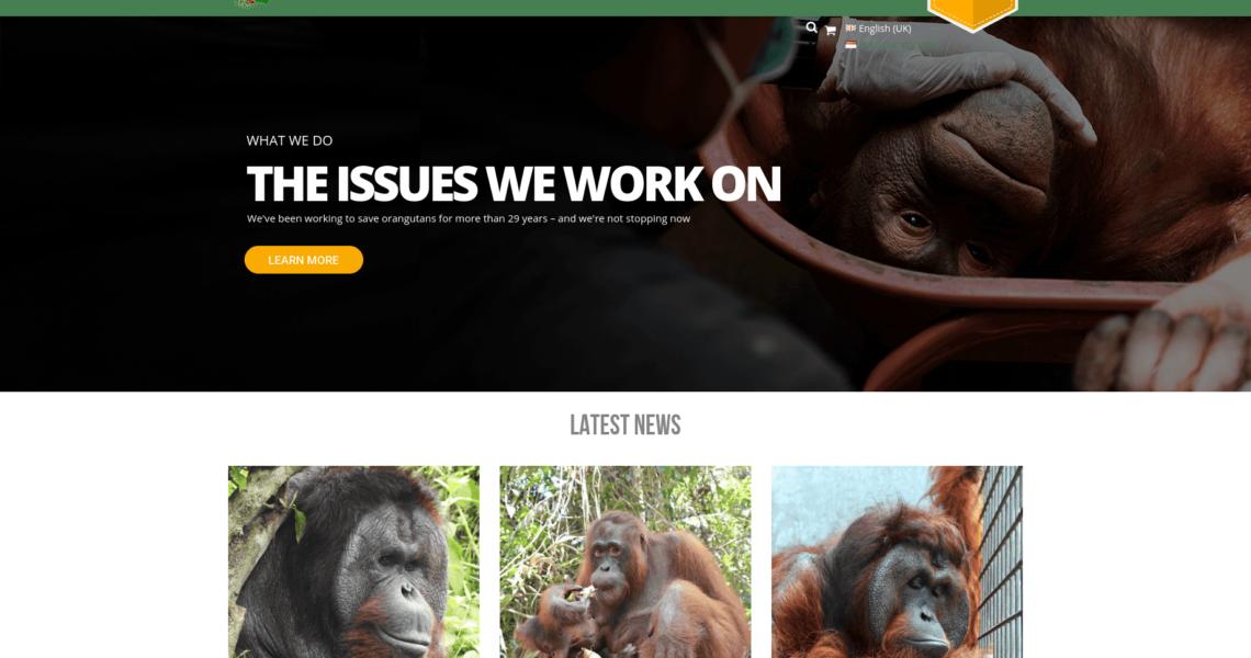 Borneo Orang-Utan Überleben
